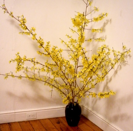 Forsythia in Black Vase