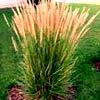 Carl Forester Grass