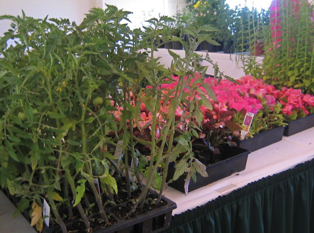Churchills Donated Veggies & Annuals