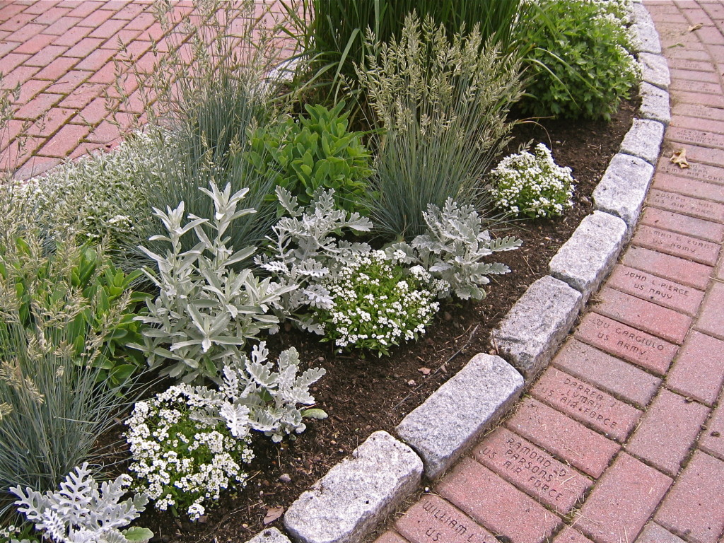 Silver & White Border at the Veteran's Garden