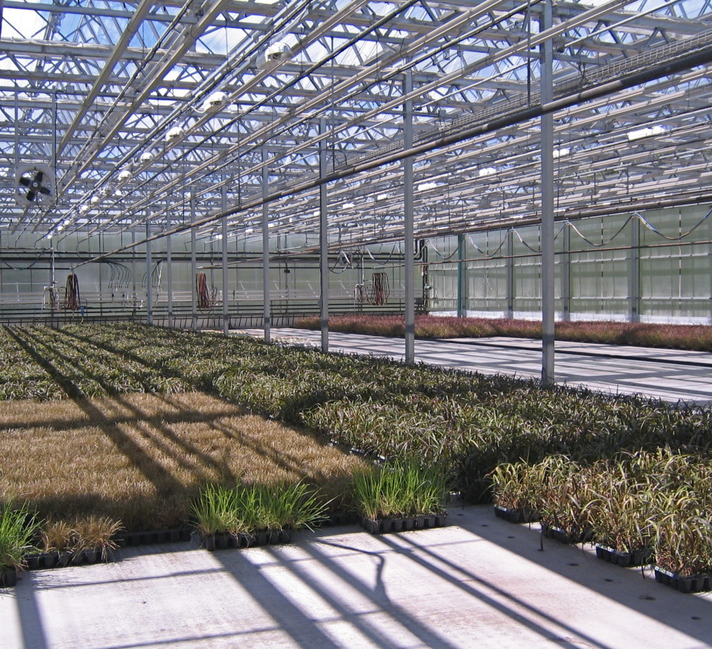 Grasses growing here! Note the watering holes in the floor. The plants are watered by flooding the floor instead of showering overhead.