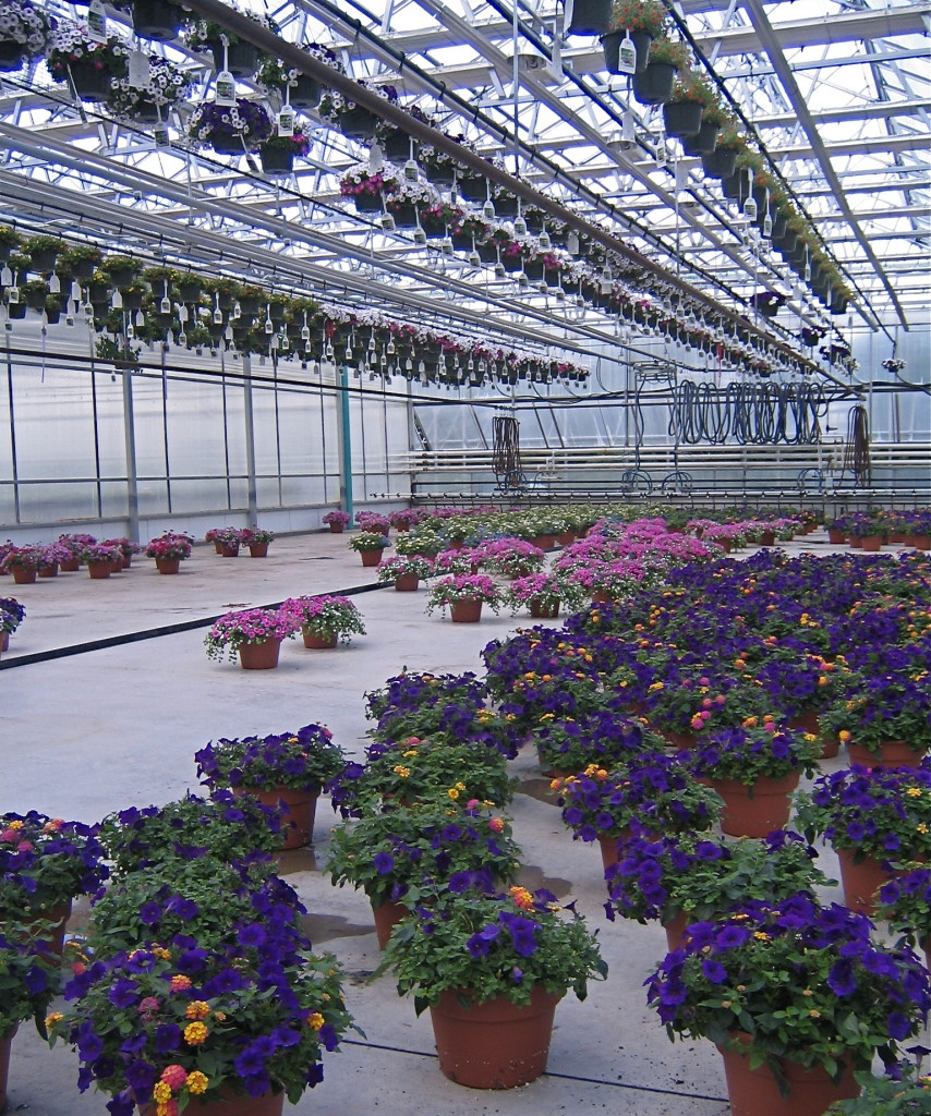 Planters ready to ship from the massive green house.