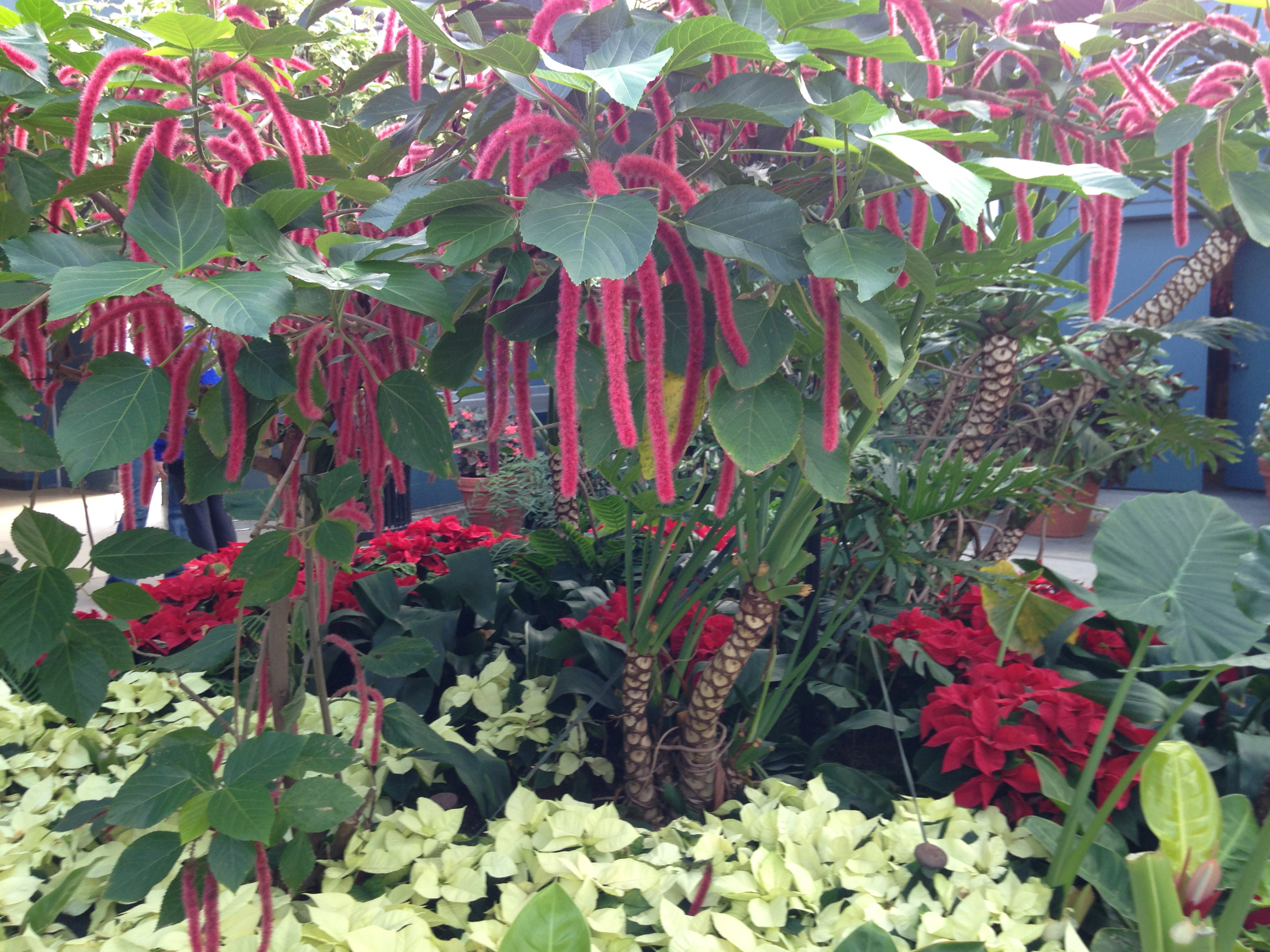 RI Botanical Garden 14