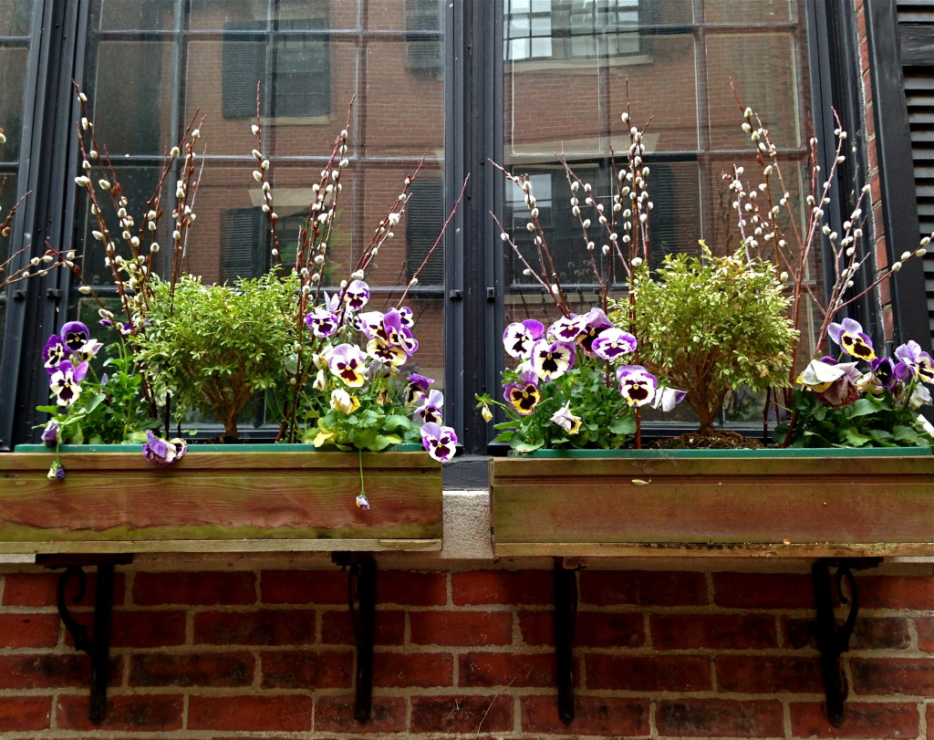 Pansy & Pussy Willow Windowboxes