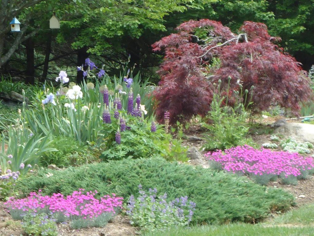 Carols Garden2